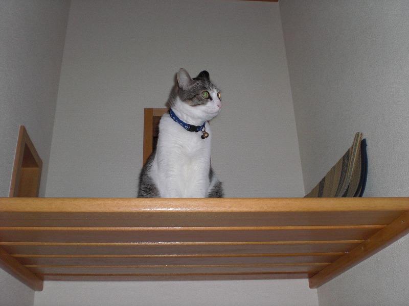 ニャンと階段の空きのスペースでくつろいでます。